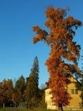 Πολύ υψηλό δέντρο από το σπίτι Στοκ Φωτογραφίες