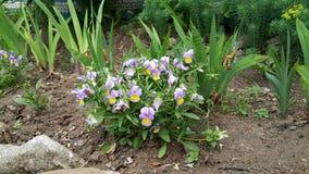 Πολύ όμορφα λουλούδια Στοκ εικόνα με δικαίωμα ελεύθερης χρήσης