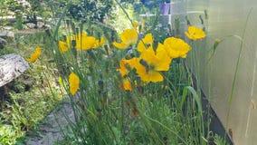 Πολύ όμορφα λουλούδια Στοκ Φωτογραφίες
