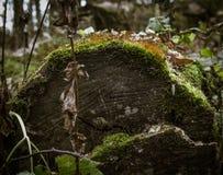 Πράξεις της φύσης 2 Στοκ Εικόνες