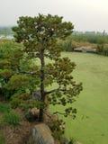 Πράσινα άλγη στο νερό στη λίμνη με τις καφετί και πράσινο χλόες και το δέντρο και τον αγωγό στοκ εικόνα