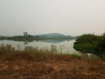Πράσινα άλγη στο νερό στη λίμνη με τις καφετιές και πράσινες χλόες με το λόφο και την αντανάκλαση στοκ φωτογραφία με δικαίωμα ελεύθερης χρήσης