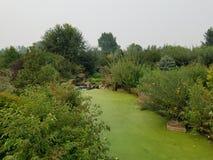 Πράσινα άλγη στο νερό στη λίμνη με τις καφετιές και πράσινες χλόες στοκ εικόνα