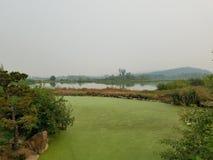 Πράσινα άλγη στο νερό στη λίμνη με τις καφετιούς και πράσινους χλόες και τους λόφους στοκ εικόνα με δικαίωμα ελεύθερης χρήσης