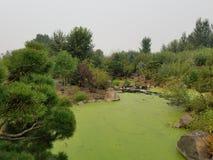 Πράσινα άλγη στο νερό στη λίμνη με τις καφετιούς και πράσινους χλόες και τους βράχους στοκ εικόνες