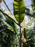Πράσινα άνθισης στο βοτανικό κήπο στοκ εικόνες