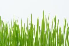 πράσινα άχυρα χλόης Στοκ εικόνες με δικαίωμα ελεύθερης χρήσης