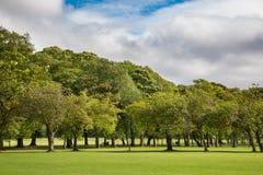 Πράσινα δέντρα δαμάσκηνων χορτοταπήτων στο πάρκο λιβαδιών, Εδιμβούργο Στοκ εικόνες με δικαίωμα ελεύθερης χρήσης