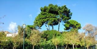 Πράσινα δέντρα, βλάστηση και ο μπλε ουρανός Στοκ εικόνες με δικαίωμα ελεύθερης χρήσης