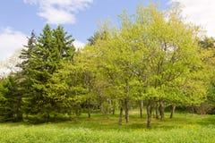 Πράσινα δέντρα ενάντια στον ουρανό Στοκ Φωτογραφία