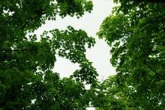 Πράσινα δέντρα επάνω ανωτέρω Στοκ Εικόνες