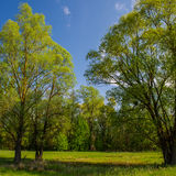 πράσινα δέντρα λιβαδιών Στοκ φωτογραφία με δικαίωμα ελεύθερης χρήσης