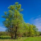 πράσινα δέντρα λιβαδιών Στοκ φωτογραφίες με δικαίωμα ελεύθερης χρήσης
