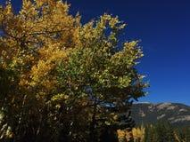 πράσινα δέντρα κίτρινα στοκ φωτογραφίες