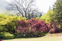 Πράσινα δέντρα και κόκκινα φύλλα Στοκ Εικόνα