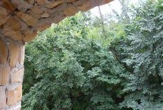 Πράσινα δέντρα ορατά από το άνοιγμα του Σινικού Τείχους των τούβλων Στοκ φωτογραφίες με δικαίωμα ελεύθερης χρήσης