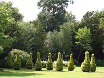 πράσινα δέντρα πάρκων Στοκ Εικόνα