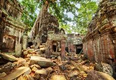 Πράσινα δέντρα που αυξάνονται μεταξύ των καταστροφών του ναού Preah Khan σε Angkor Στοκ Εικόνες