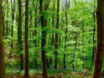 Πράσινα δέντρα στο δάσος Στοκ εικόνες με δικαίωμα ελεύθερης χρήσης