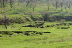 πράσινα δέντρα τοπίων χλόης Στοκ εικόνα με δικαίωμα ελεύθερης χρήσης