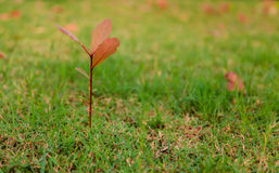πράσινα δέντρα χλόης Στοκ Φωτογραφία