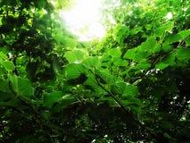 Πράσινα αγροκτήματα στοκ εικόνες