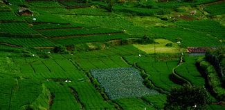 Πράσινα αγροκτήματα στοκ εικόνες με δικαίωμα ελεύθερης χρήσης