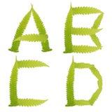 πράσινα απομονωμένα φύλλα φτερών χαρακτήρα Στοκ Φωτογραφίες