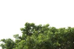 πράσινα απομονωμένα φύλλα Στοκ φωτογραφία με δικαίωμα ελεύθερης χρήσης