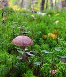 Πράσινα δασικά λαχανικά δέντρων βρύου λειχήνων χλόης μανιταριών στοκ εικόνα με δικαίωμα ελεύθερης χρήσης