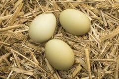 Πράσινα αυγά στο άχυρο στο κοτέτσι κοτόπουλου Στοκ Εικόνες