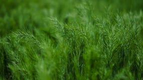 Πράσινα αυτιά Στοκ Εικόνες