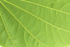Πράσινα αφηρημένα υπόβαθρα φύλλων Στοκ Εικόνες