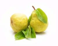 πράσινα αχλάδια ώριμα δύο Στοκ εικόνες με δικαίωμα ελεύθερης χρήσης