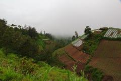 Πράσινα βουνά, ζούγκλα και ασιατικά terraced αγροκτήματα στοκ φωτογραφία