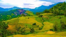 Πράσινα βουνά με τους ιδιόρρυθμους τομείς στοκ εικόνες