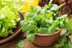 Πράσινα για τη φρέσκια υγιή σαλάτα Στοκ Φωτογραφίες