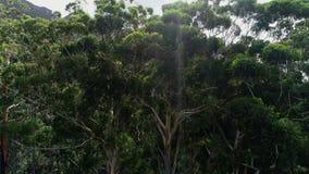 Πράσινα δέντρα δασικό 4k απόθεμα βίντεο