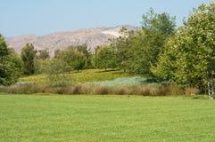 πράσινα δέντρα λιβαδιών χλόη Στοκ εικόνες με δικαίωμα ελεύθερης χρήσης