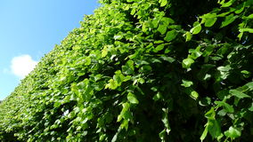 Πράσινα δέντρα με το μπλε ουρανό στοκ φωτογραφίες με δικαίωμα ελεύθερης χρήσης