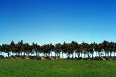 πράσινα δέντρα πεδίων Στοκ Φωτογραφίες