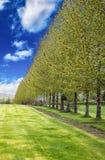 Πράσινα δέντρα που συσσωρεύονται σε έναν κήπο σε ένα κλίμα μπλε ουρανού στοκ εικόνες με δικαίωμα ελεύθερης χρήσης