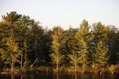 πράσινα δέντρα Στοκ εικόνες με δικαίωμα ελεύθερης χρήσης