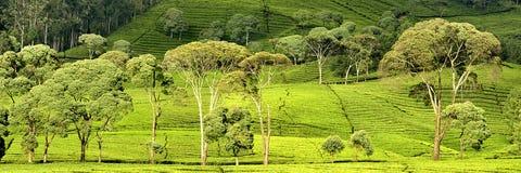 πράσινα δέντρα Στοκ Εικόνες