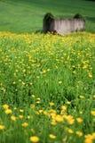 Πράσινα εδάφη και κίτρινα λουλούδια Στοκ Εικόνα