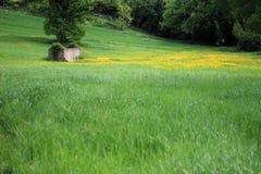 Πράσινα εδάφη και κίτρινα λουλούδια Στοκ εικόνες με δικαίωμα ελεύθερης χρήσης
