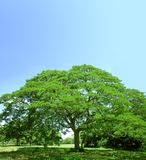 πράσινα θερινά δέντρα Στοκ φωτογραφία με δικαίωμα ελεύθερης χρήσης