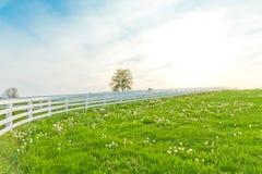 Πράσινα λιβάδια των αγροκτημάτων αλόγων. Στοκ Φωτογραφία