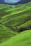Πράσινα λιβάδια Στοκ Φωτογραφία