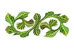 Πράσινα κίτρινα φύλλα που απομονώνονται Στοκ φωτογραφία με δικαίωμα ελεύθερης χρήσης